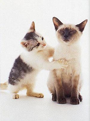 reiki kittens